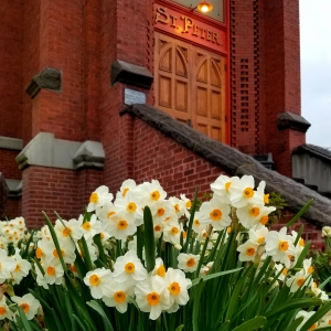 Daffodils in bloom outside St Peter's Landmark in The Dalles Oregon